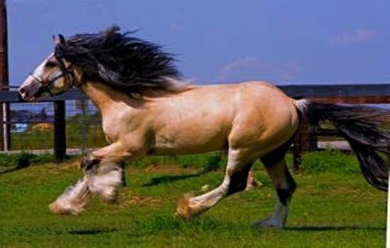 珠海骑马场团队拓展训练基地